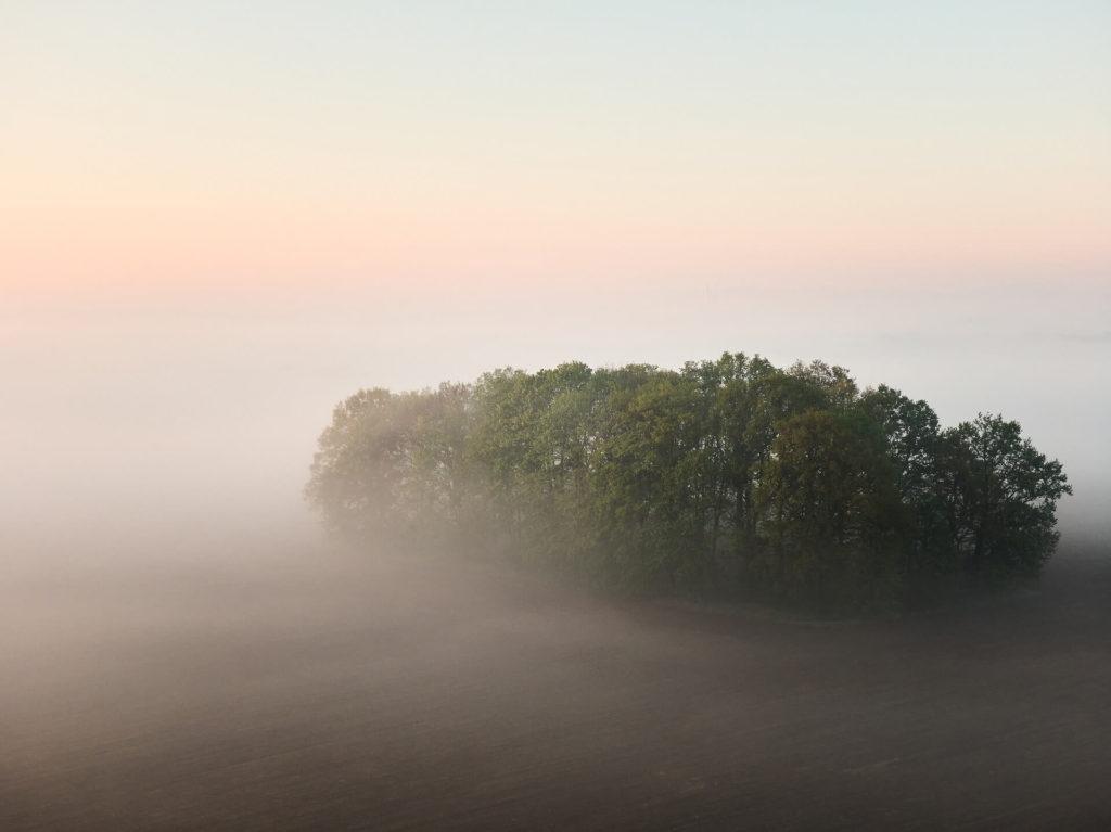 Jacek Turek - pole mgła