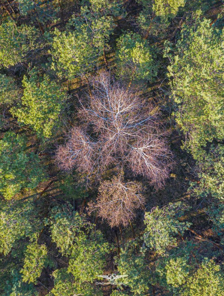 Łukasz Muras - Drzewo-układ krwionośny